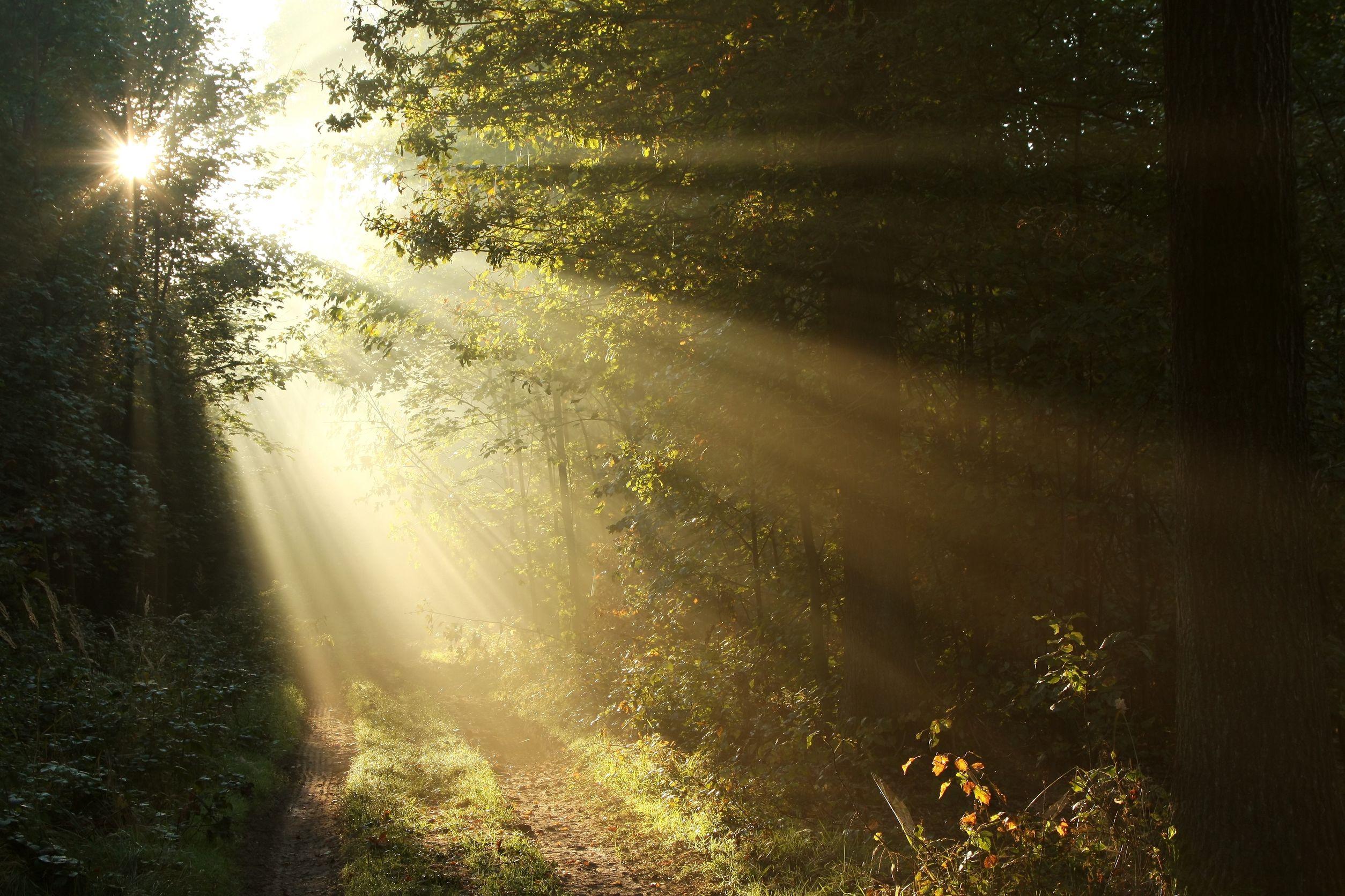 Keyhole-Light-through-trees-dirt-road