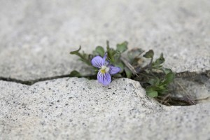 flower-in-crack